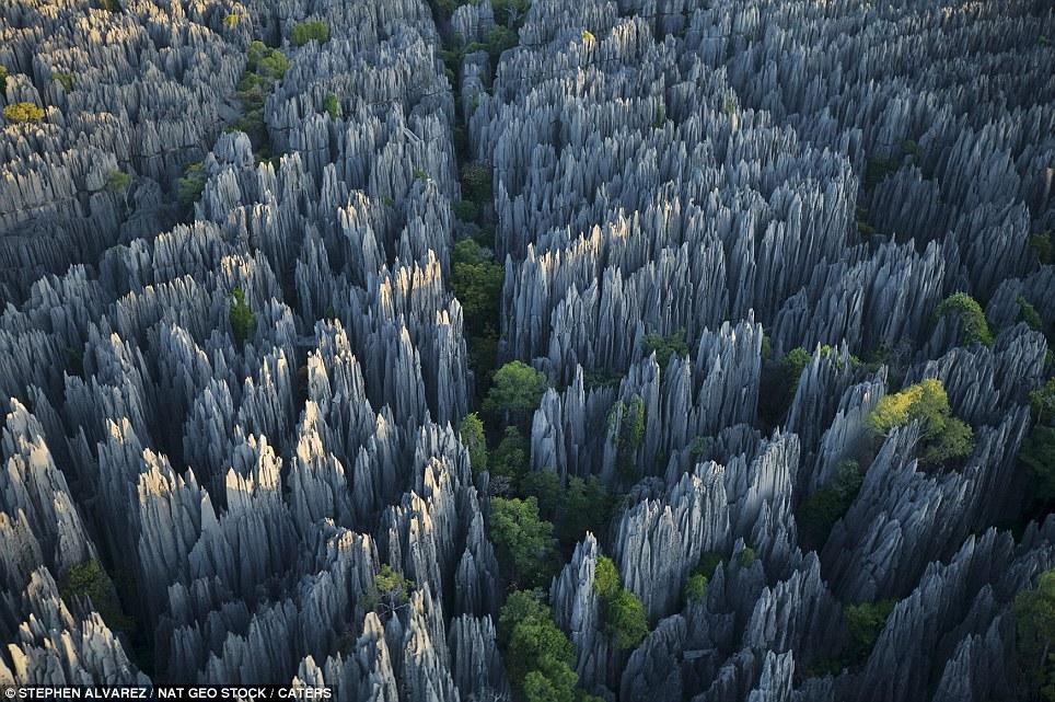 Stone Forest, Madagascar